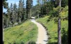 Path Through Forest Hillside