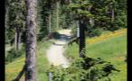 Dirt Path Through Whistler Hillside