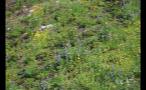Flowers On Slanted Hillside
