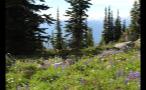 Flowery Rocky Forest On Hillside