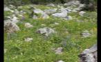 Whistler Rocky Meadow
