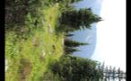 Vertical Forest Mountaintop 2