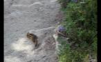 Chipmunk On Rock Slab