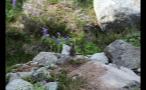 Chipmunk Facing Away On Rock