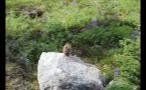 Chipmunk Sitting On Rocky Hillside