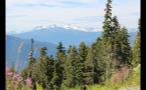 Mountain Forest Nature Landscape