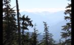 Trees Facing Fog Covered Mountain Range