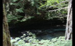 Rushing River Water By Trees 2