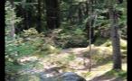 Sunlight Shinning In Forest