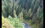 High Angle View Of Forest Stream