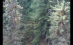 Overgrown Forest On Mountainside