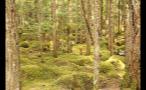 Whistler Overgrown Forest