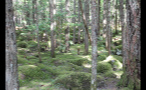 Mossy Mounds In Forest