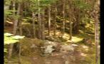Green Forest Nature Scene