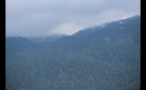 Cloudy Mountainous Forest