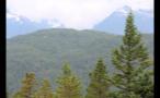 Tree Tops On Mountain Edge 2