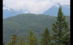 Trees Spread Over Hillside