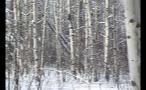 Fallen Tree in Wintery Forest