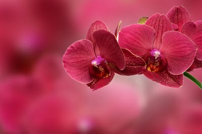 Pantone Organic Color Trends Orchid