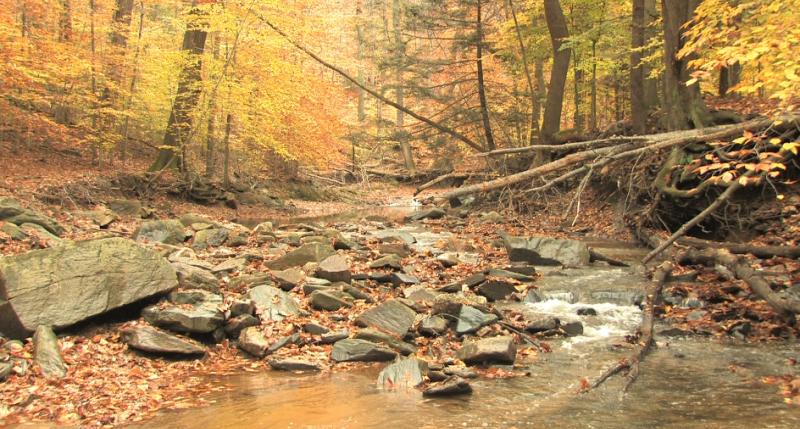VideoBlocks Celebrates Autumn