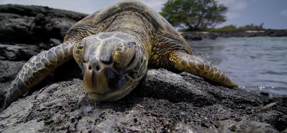 Filming Hawaii in 5K: VideoBlocks Sponsors Luke Neumann