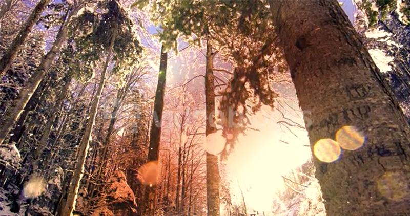 Top 10 Surrealist Videos: Stock Footage That Reimagines Creativity