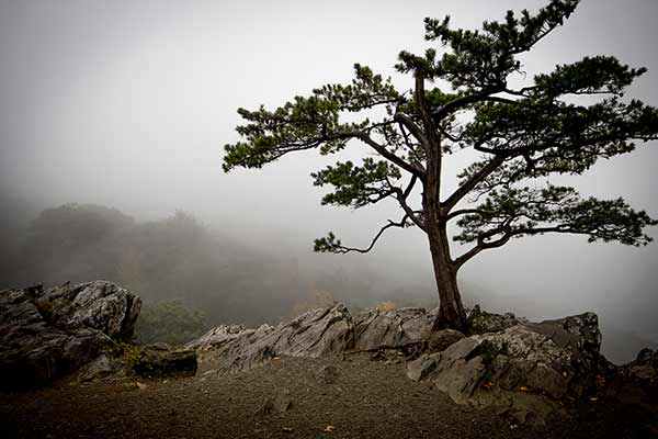 Tree on Foggy Hill Stock Photo