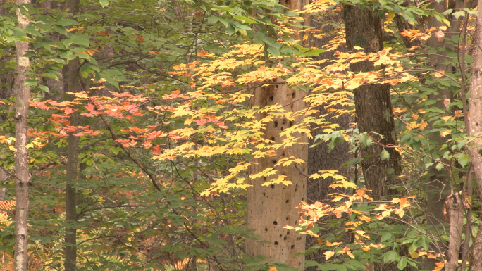 Vibrant yellow and red fall foliage