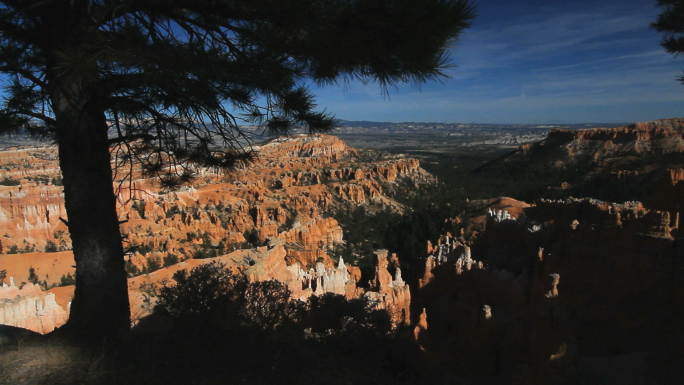 Bryce Canyon National Park With Pine Tree 2