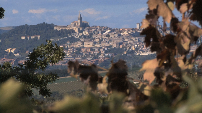 Italy Todi and Vines 21