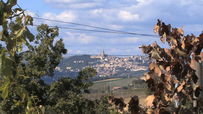Italy Todi and Vines 11