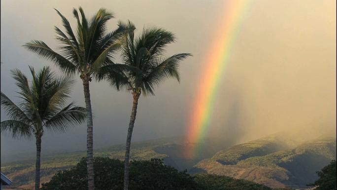 Maui Palms and Vivid Rainbow