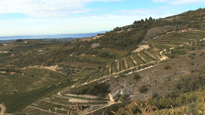 Italy Veneto Vineyards Valpolicella 2
