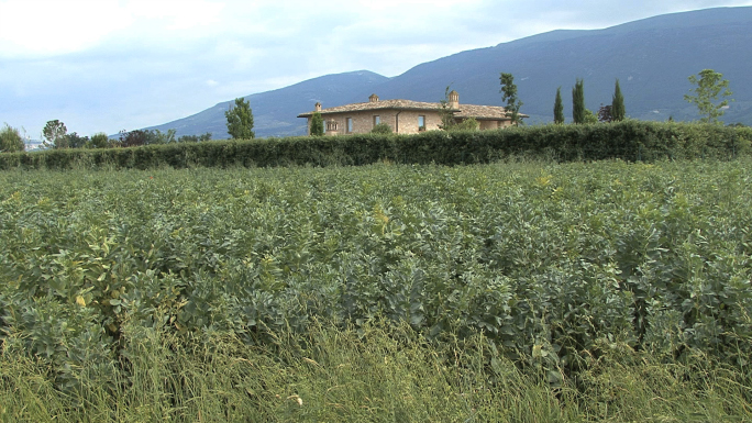 Italy Umbria Farm with Crops