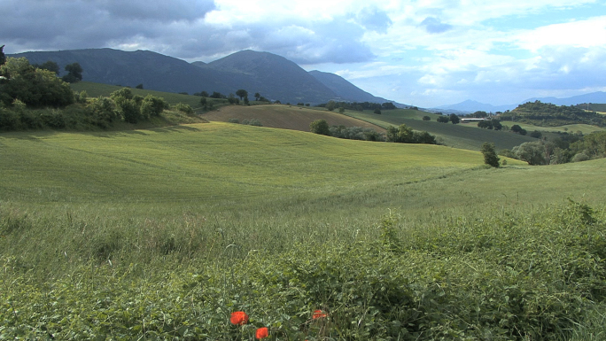 Italy Umbria Landscape with Wheat
