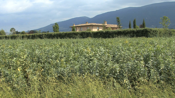 Italy Umbria Pans Agriculture