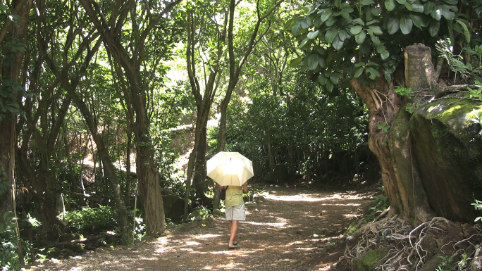 Kauai Man with Umbrella on Path