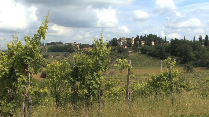 Tuscan Village and Vineyards