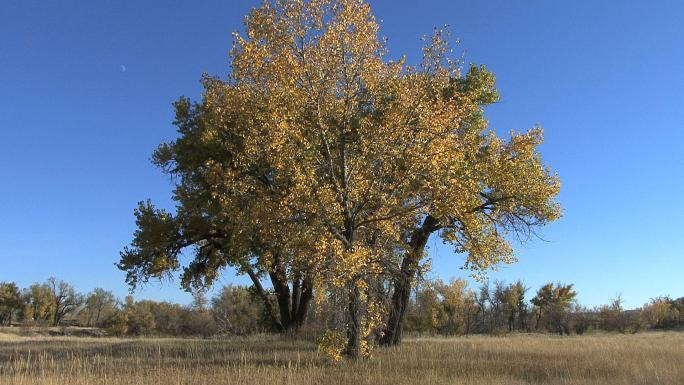 Wyoming Fall Trees Blue Sky