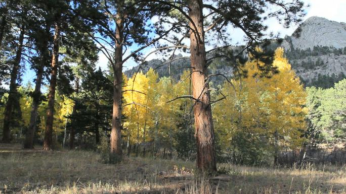 Colorado Trees in Fall