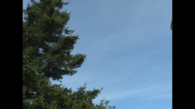 Pine Trees and Lighthouse 4