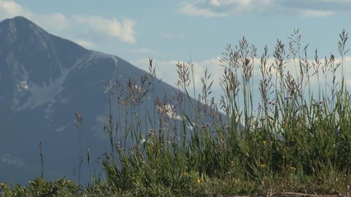 Colorado Grass with Mountain Backdrop