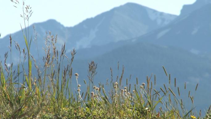 Colorado Grass with Mountain Backdrop 3