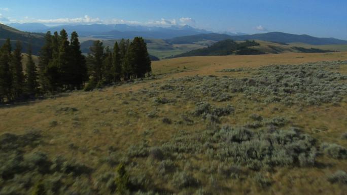 Flat Green Landscape 2