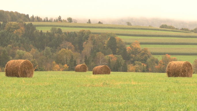 Hay Bails With Rows Of Crops In Background