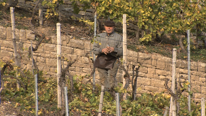 Man in Terraced Vineyard