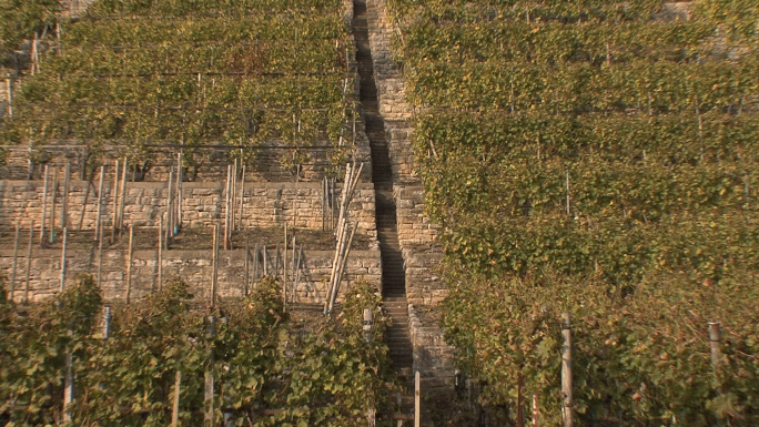 Terraced Vineyards Along Neckar Zoom Out