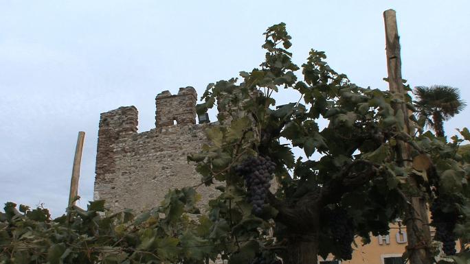 Italy Veneto Bardolino Tower and Grapes