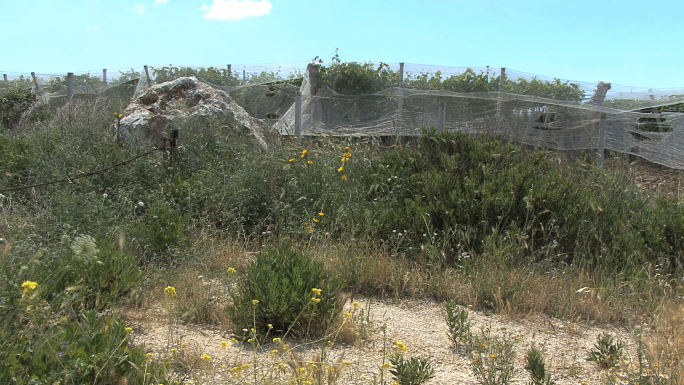 Sicily Vineyard 3