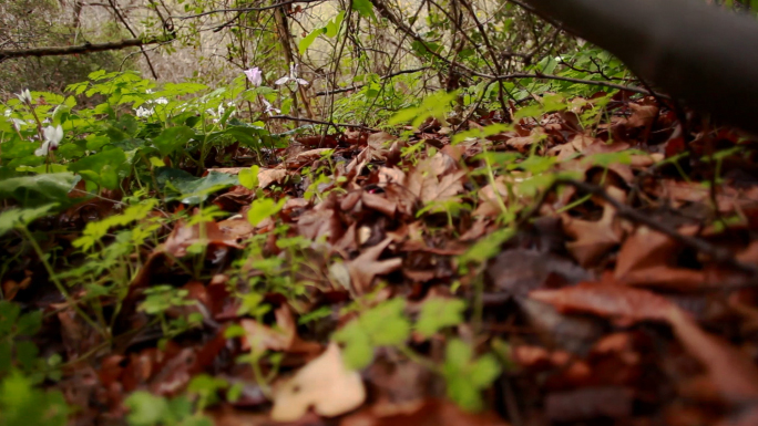 Leaves on the Forest Floor 2
